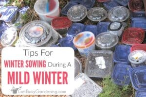 Tips For Winter Sowing During A Mild Winter