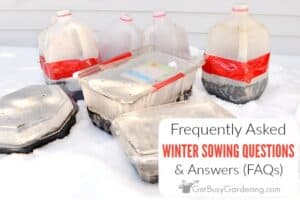 Winter Sowing Questions & Answers (FAQs)