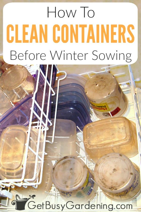 Reusing plastic containers that otherwise would have been thrown out is one of the great things about winter sowing seeds. As an added bonus, some can be saved and reused again year after year. Washing winter sowing containers is much faster than finding and preparing new mini greenhouses every year. But it can also become a huge chore. Learn all about reusable options, and get my best tips and hacks for how to make it fast and easy to clean winter sowing containers.