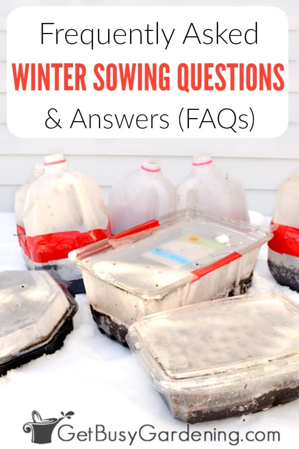 Winter sowing questions and answers (FAQs)