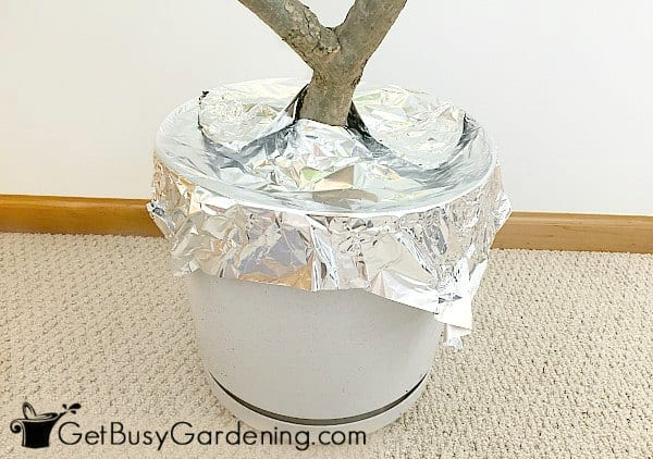 Aluminum foil keeps cats out of potted plants