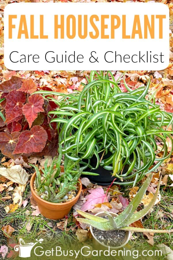 Fall houseplant care guide and checklist