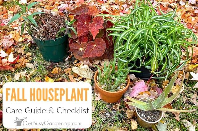 Fall Houseplant Care Checklist
