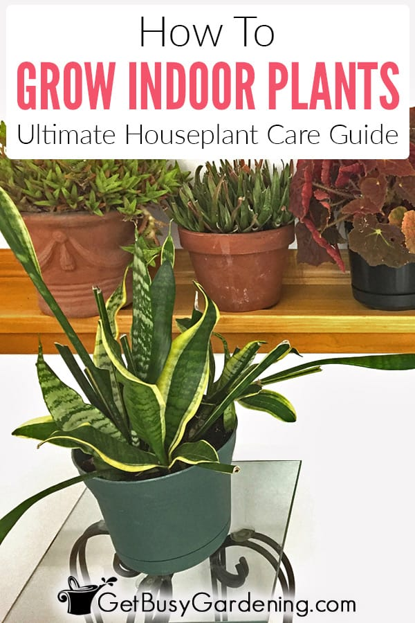 How To Grow Indoor Plants: Ultimate Houseplant Growing Guide