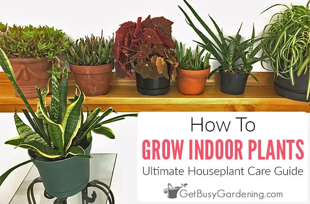How To Grow Indoor Plants: The Ultimate Guide