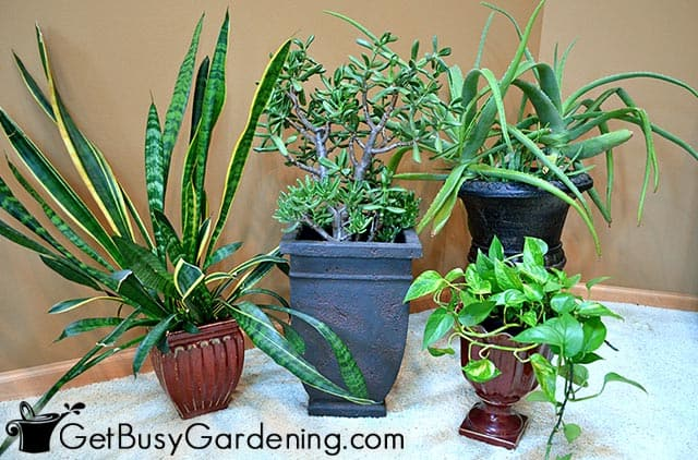 Healthy indoor plants