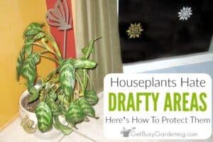 Houseplants Don't Like Drafts