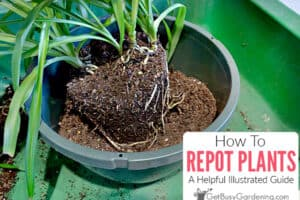 How To Repot Plants: A Helpful Illustrated Guide