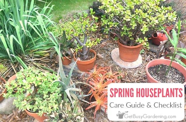 Spring Houseplant Care Checklist