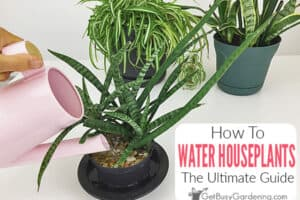 How To Water Indoor Plants: The Ultimate Guide