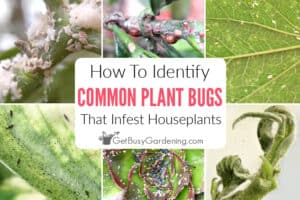 How To Identify Common Types Of Houseplant Bugs
