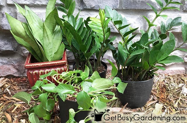 A few of my favorite easy care houseplants