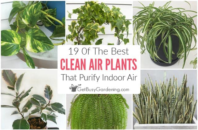19 Indoor Plants That Clean The Air In Your House