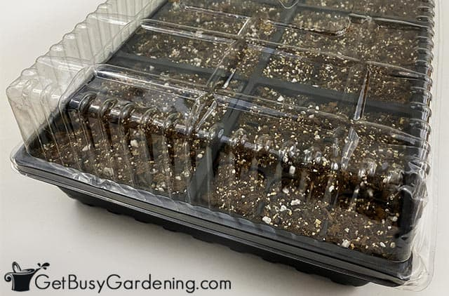 Covered tray after planting basil seeds