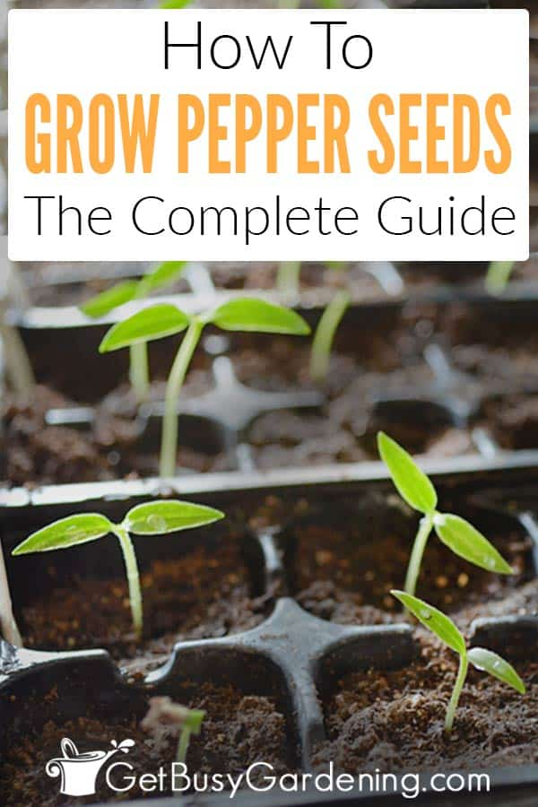 How To Grow Peppers From Seed: The Complete Guide