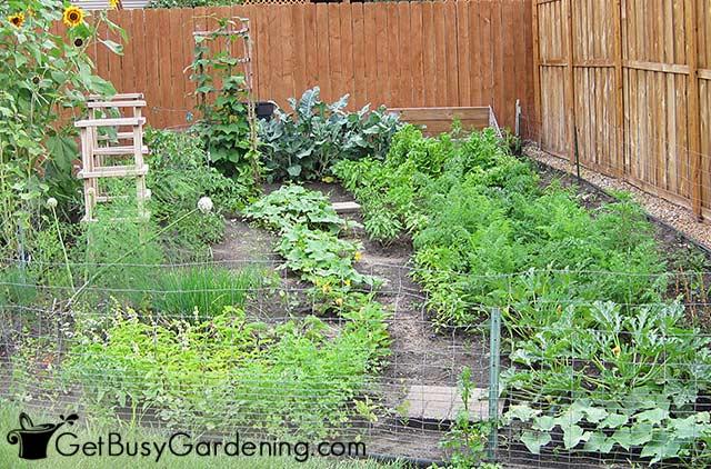 My vegetable garden back in 2009