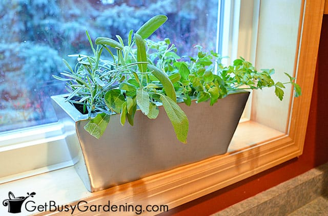 Cute little indoor herb garden