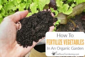 How To Fertilize A Vegetable Garden