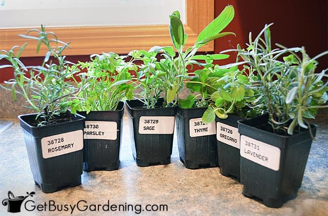 Some easy herbs to grow inside