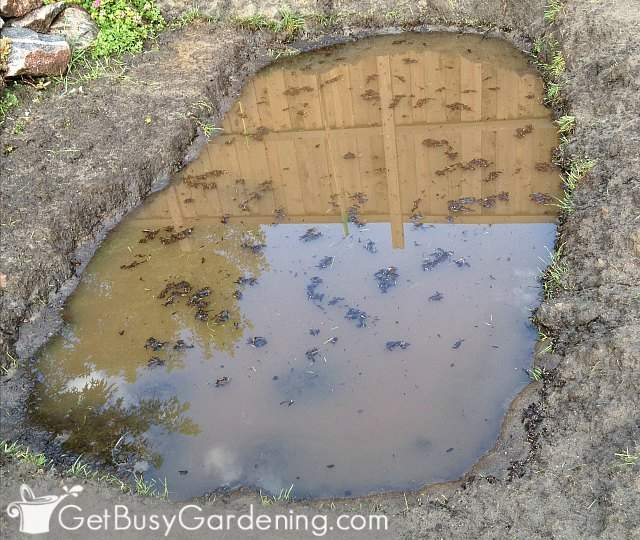 Basin full of water before planting