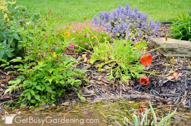 Inside slope plants to use in a rain garden