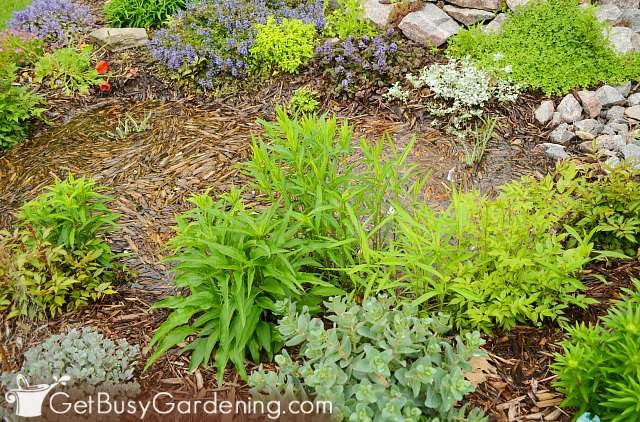 Mulch in my rain garden