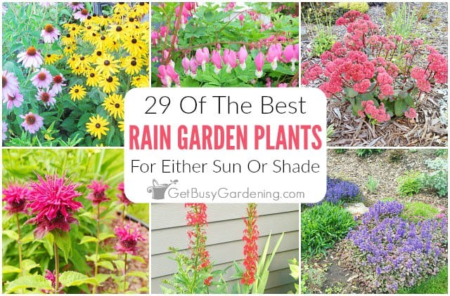 29 Rain Garden Plants For Sun Or Shade
