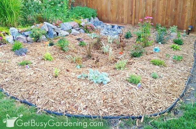 Rain garden project completed