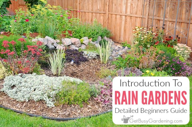 Rain Gardens: A Detailed Guide For Beginners