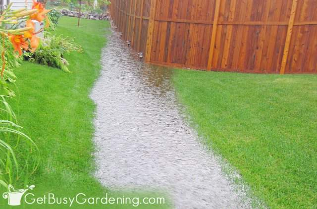Rainwater river running through my yard