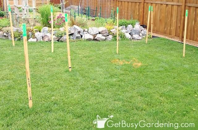 Staking the rain garden outline