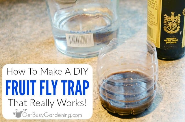 How To Make A Homemade DIY Fruit Fly Trap