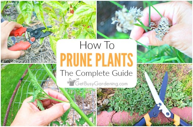 Pruning Plants: The Complete Step-By-Step Guide