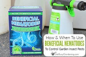 Using Beneficial Nematodes To Control Garden Pests