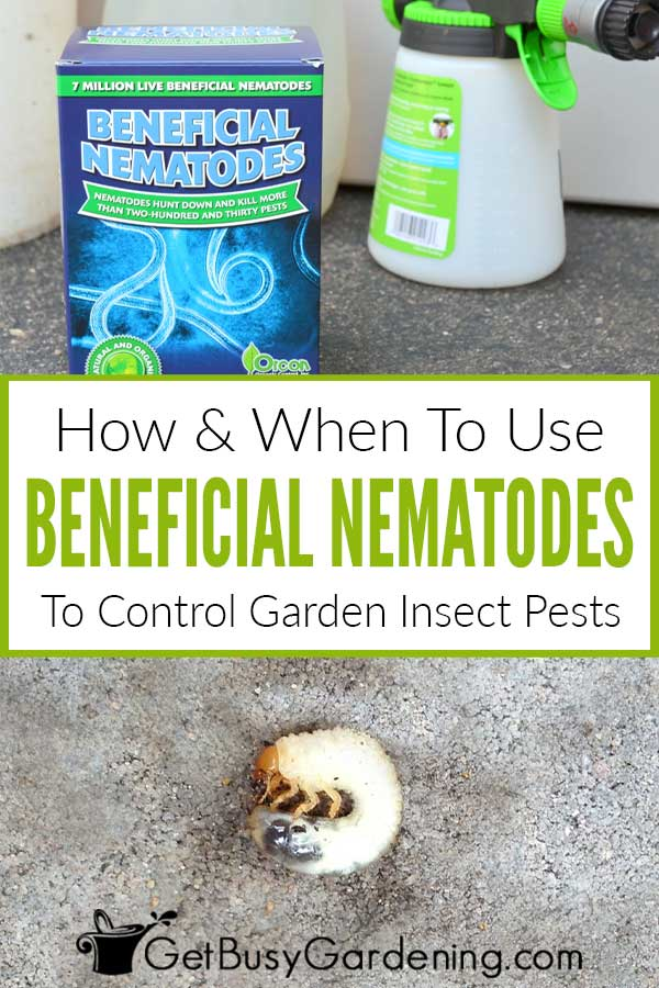 How & When To Use Beneficial Nematodes To Control Garden Insect Pests