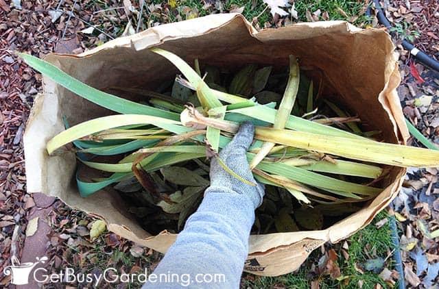 Discarding iris waste in garbage