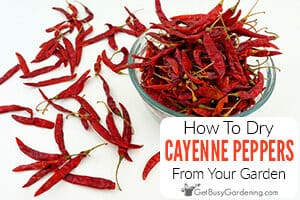 How To Dry Cayenne Peppers From Your Garden