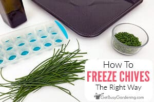 Freezing Fresh Chives The Right Way