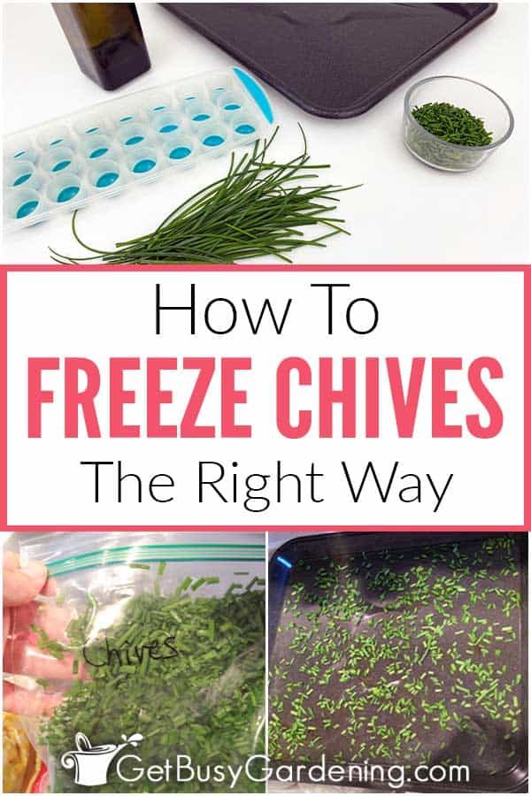 How To Freeze Chives The Right Way