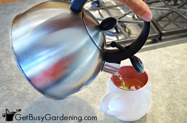 Pouring hot water over bee balm for tea