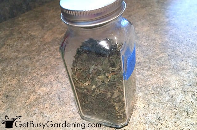 Storing dried basil in a spice jar
