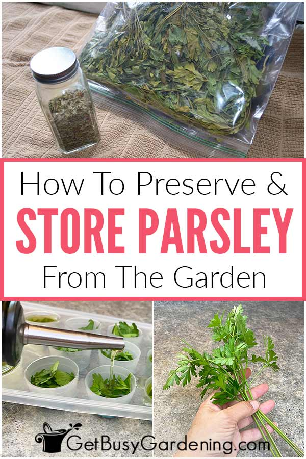 How To Preserve & Store Parsley From The Garden