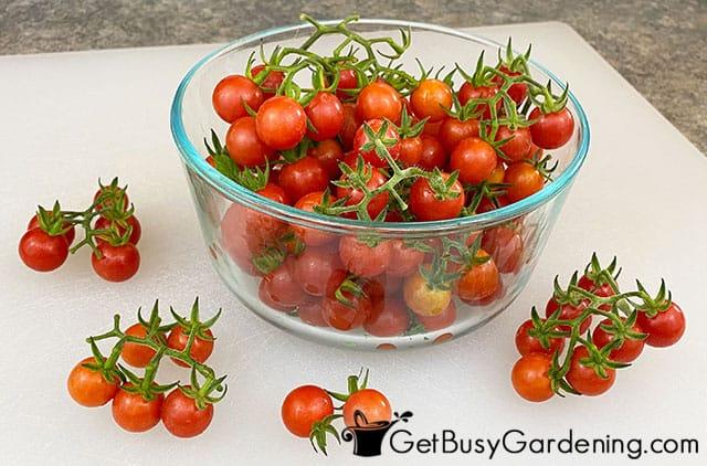 Fresh cherry tomatoes from my garden