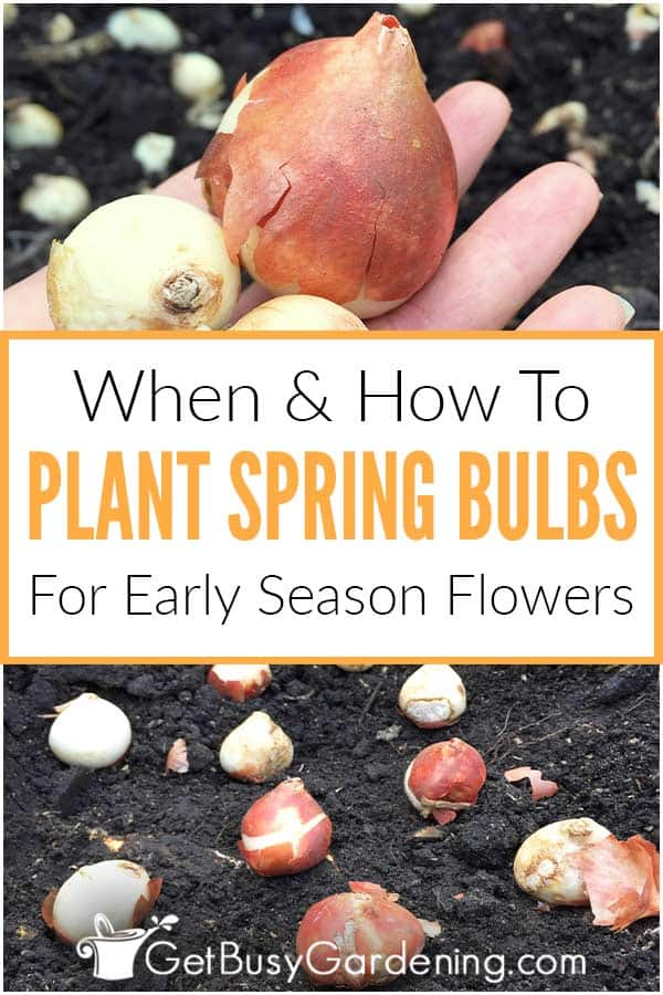 When & How To Plant Spring Bulbs For Early Season Flowers