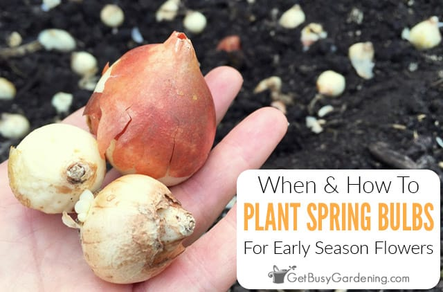 When & How To Plant Spring Bulbs