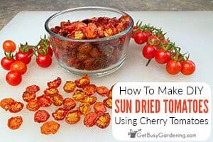 Sun Dried Cherry Tomatoes: An Easy Homemade Recipe