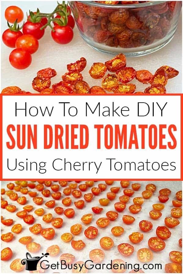 How To Make DIY Sun Dried Tomatoes Using Cherry Tomatoes