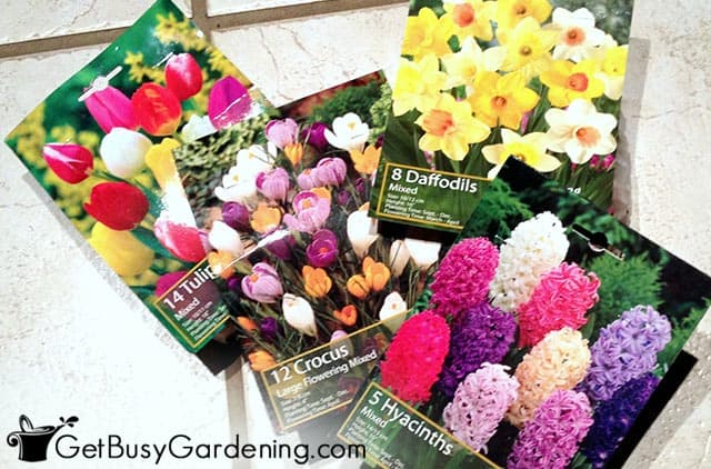 Various flower bulbs for spring color