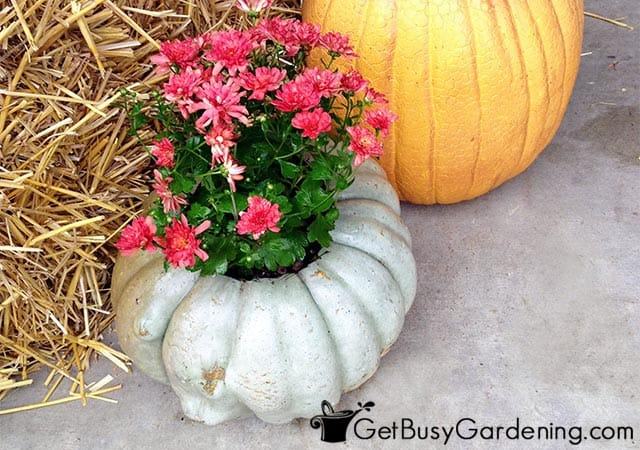 My pumpkin mum planter fall decoration
