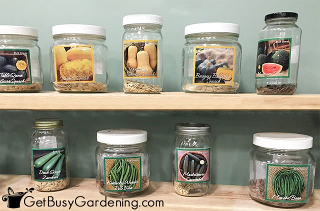 Seed stored in large jars